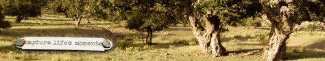 bandeau-arbre-capture-11