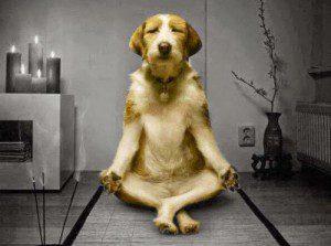 apprendre-à-méditer-mbsr-réduction-du-stress-pleine-conscience-paris 09