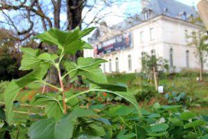 Méditation-dimanche-boulogne billancourt